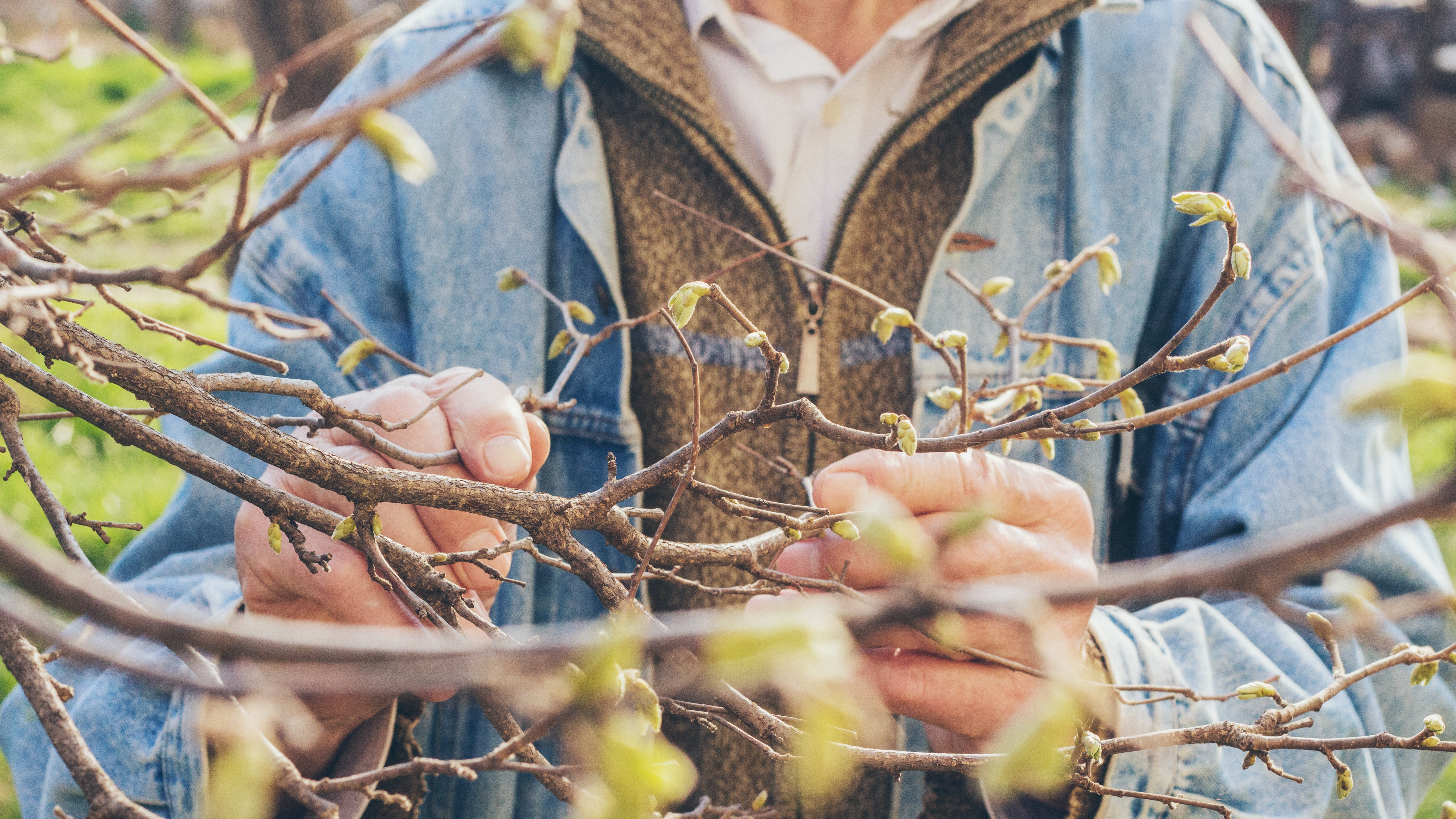 Family Reflection Video: Pruning for God