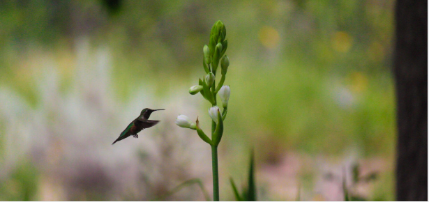 A Hummingbird at Work